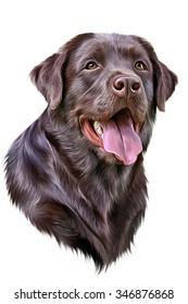 Drawing dog Labrador, portrait on white background