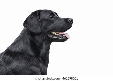Drawing dog Labrador, portrait on a white background