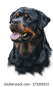 Drawing of the dog rottweiler, tricolor, oil painting on a white background
