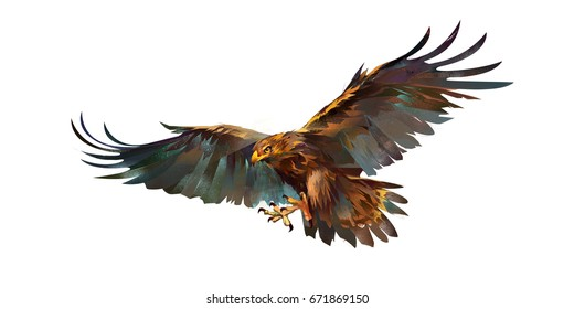 Drawing flying eagle on white background