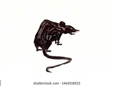 Drawing with gouache: Big, black, angry rat.