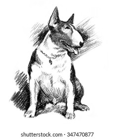 drawing illustration of bull terrier dog cartoon pencil and charcoal on paper art and pastel sketch