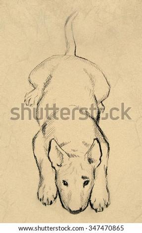 Drawing Illustration Bull Terrier Dog Cartoon Stockillustration