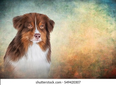 Drawing, illustration Dog breed Australian Shepherd, Aussie portrait oil painting on old vintage color grunge paper background. Hand drawn home pet. Digital painting.