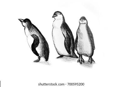 Drawing illustration of penguins
