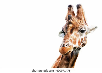 Drawing,  illustration Portrait of a giraffe on a white background