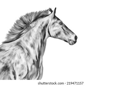 Drawing illustration a red horse, portrait black white
