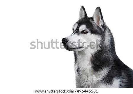 drawing illustration siberian husky dog portrait stock illustration