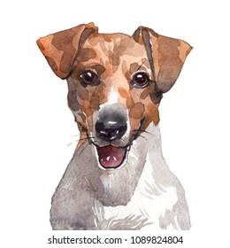 Drawing Jack Russell Terrier watercolor