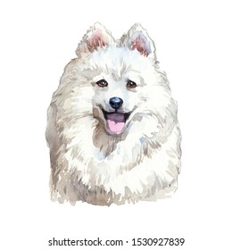 Drawing Japanese Spitz Dog watercolor