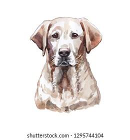 Drawing Labrador Retriever Dog watercolor