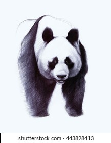 Drawing original of giant panda isolated on white background. Ballpoint pen drawing.
