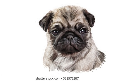Drawing Puppy pug portrait oil painting on white background. Hand drawn home pet. Greeting card design. Clip art illustration