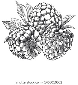 drawing raspberry on a white background