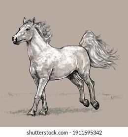 Drawing of a running horse. Color. Background.