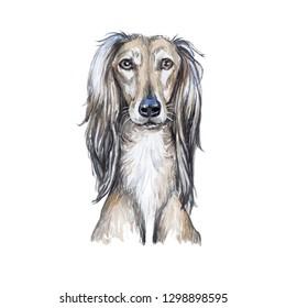 Drawing Saluki Dog watercolor
