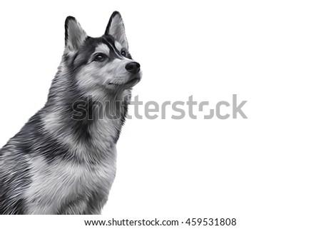 drawing siberian husky dog portrait on stock illustration royalty