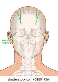 Acupuncture Points Face Images, Stock Photos & Vectors
