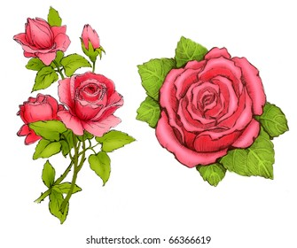 Drawings of pink roses