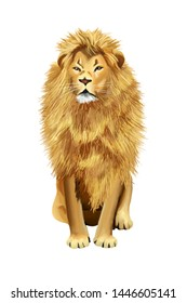 Drawn adult male lion animal on white background