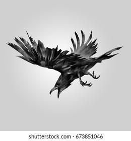 drawn attacking bird raven