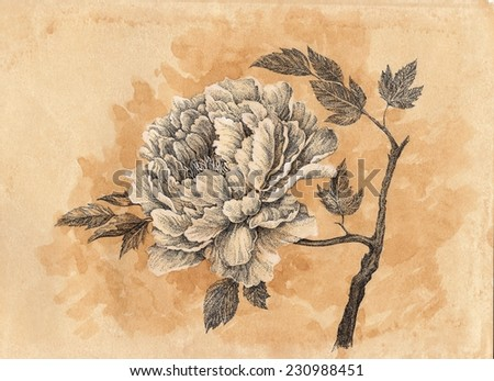 70bfa79ce Drawn By Hand Card Peony Flower Stock Illustration - Royalty Free ...