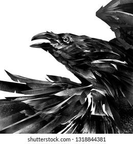 drawn designer portrait of a raven on a white background