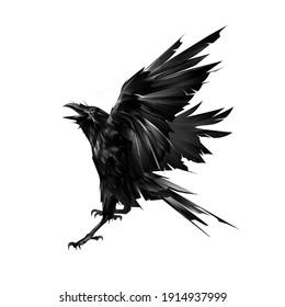 drawn flying raven bird on white background