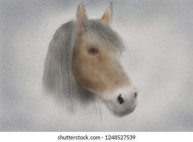 Drawn horse portrait