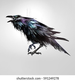 drawn isolated colored bird sitting raven