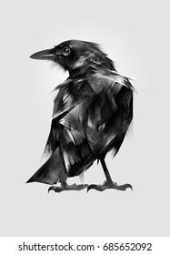 drawn isolated setting bird Blackbird