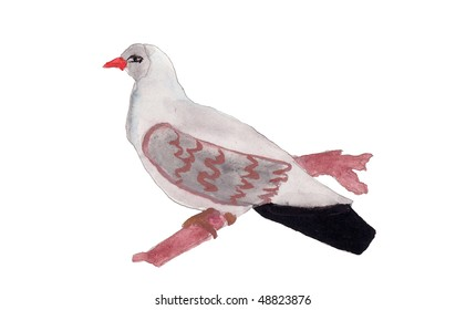 Drawn pigeon. Picture of bird by a pencil and paints on a white background