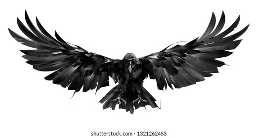 drawn raven bird in flight on a white background