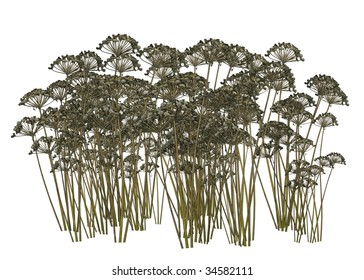 Dried brown plants on a white background