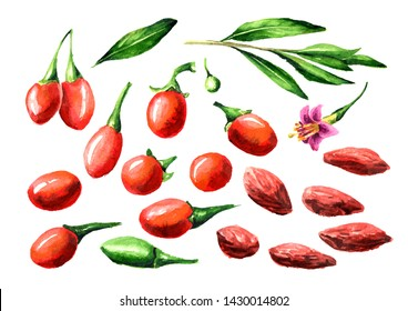 Dried and fresh Goji berries or Lycium barbarum elements set. Watercolor hand drawn illustration isolated on white background