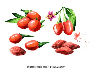 Dried and fresh Goji berries or Lycium barbarum set. Watercolor hand drawn illustration isolated on white background