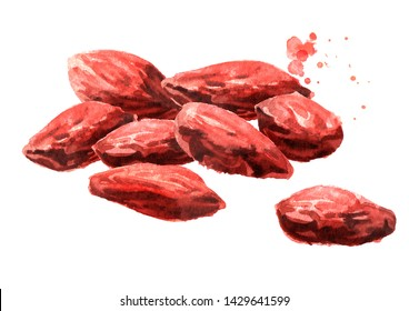 Dried Goji berries or Lycium barbarum. Watercolor hand drawn illustration isolated on white background