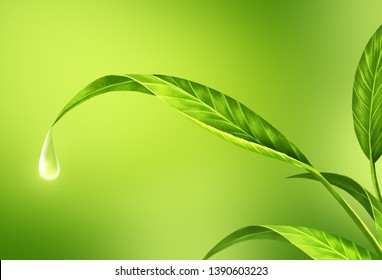 Drops of water are flowing from the lush green leaves.Gives a refreshing feeling and comfortable.Create from digital painting and add full detail of leaf  .To achieve perfection as customers want.