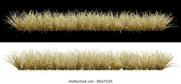 Dry grass on an isolated background