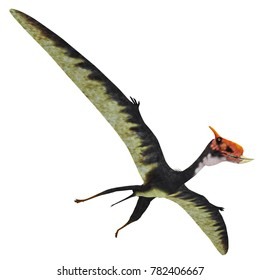 Dsungaripterus Reptile Wings Spread 3D illustration - This carnivorous pterosaur lived in China in the Cretaceous Period and preyed on shellfish.