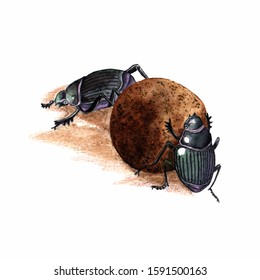 dung beetles-shrews take away each other's dung ball