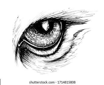 Eagle eye draw vintage pictures on white background