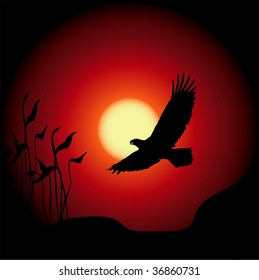 Eagle in flight silhouetted against sunset or sunrise background