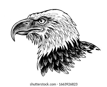 Eagle head. Ink black and white drawing