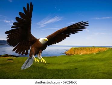 eagle landing in grass