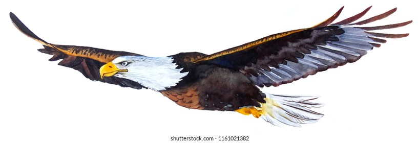 The Eagle is painted in watercolor.