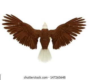 eagle rear bird eye