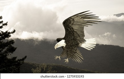 Eagle Soaring Over the Mountains - Digital Illustration