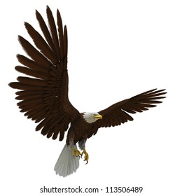 eagle white background
