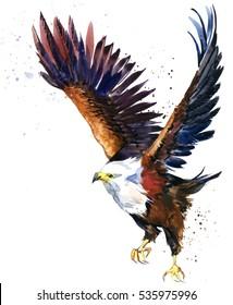 eagle. wild bird watercolor illustration.